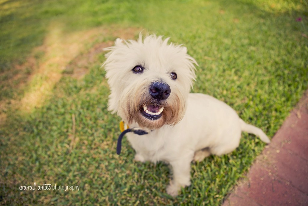001 DOGSHARE Animal Antics Photography Guest Blog