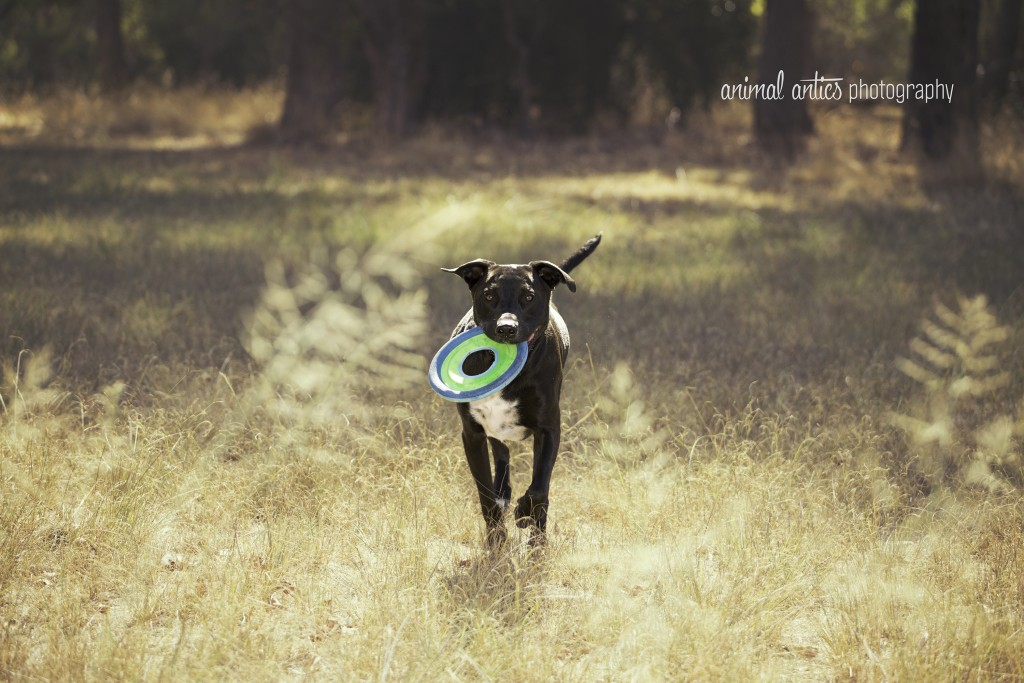 002 DOGSHARE Animal Antics Photography Guest Blog