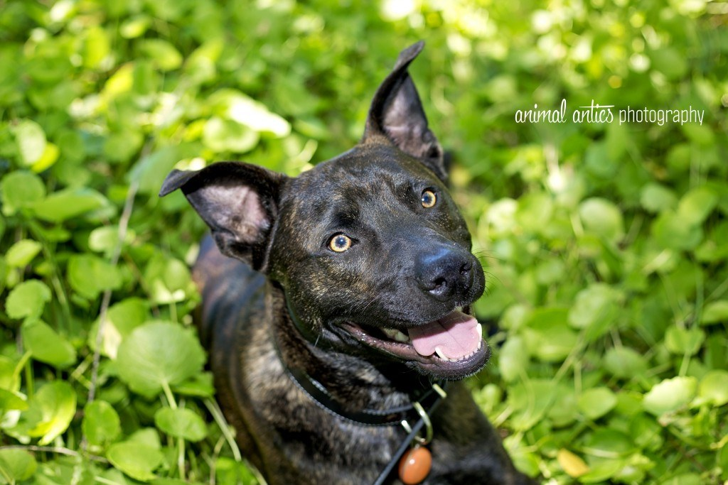 004 DOGSHARE Animal Antics Photography Guest Blog